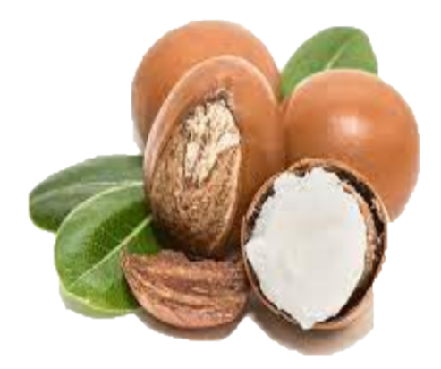 Shea butter nuts and leaves